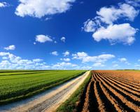 Field_Sky