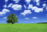 Tree_Field