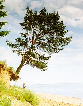 tree_falling